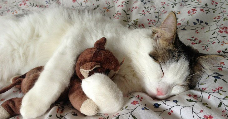 Cat Toys 2