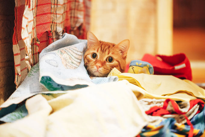 cat clothes bonding