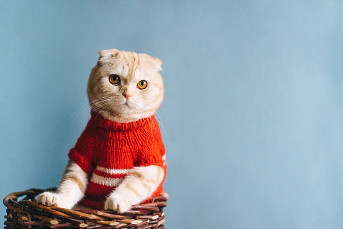 how to choose the right cat clothing for your feline