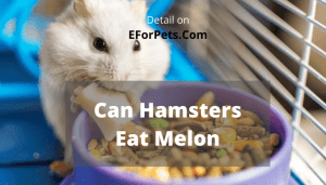 Can Hamsters Eat Melon