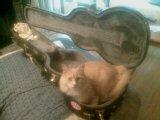 catcase