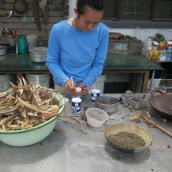 Harvesting dried seeds