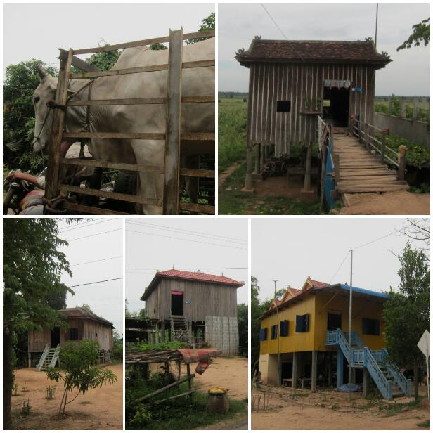A small handful of the hundreds of houses we saw. And a cow in a trailer being pulled by a motorbike.
