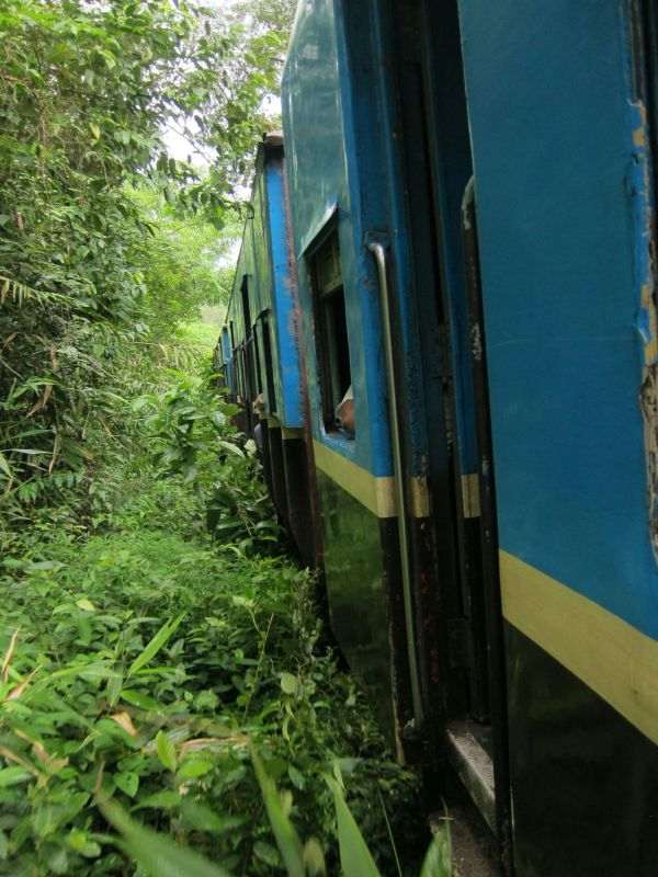 The jungle was so close to the train, branches would flit in the windows and whip us.