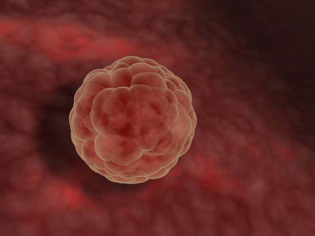 Beginnings of life: Blastocyst (early developmental stage of the fetus