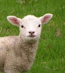 Event: Dolly & Me: Country Living & Animals - Mar 22 @ 10:00am