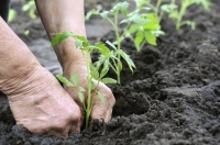 Benefits of Community Gardening