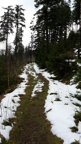 Entre 9 h 45 et midi, montée continue depuis Forbach (332 m) jusqu'à Hohloh (988 m). Au-delà de 800 m d'altitude, la neige oppose encore de la résistance au printemps.