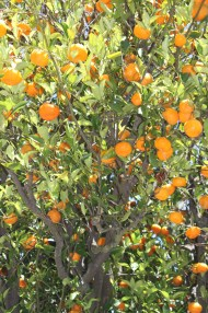Dans le jardin du Hearst Castle. California is a wonderful place / If you wanna be an orange. H. Hofstede (The Nits)