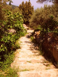 the stone paved lane to the house
