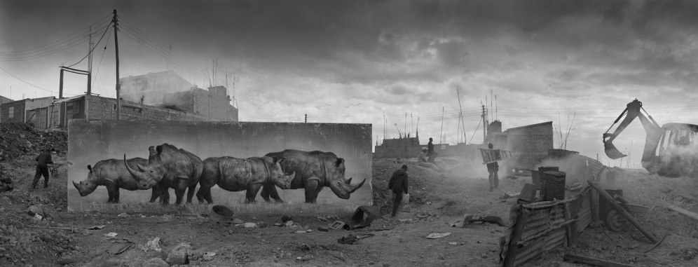 CONSTRUCTION-SITE-WITH-RHINOS