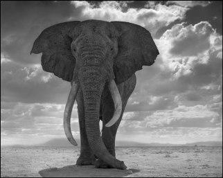Elephant-Statue
