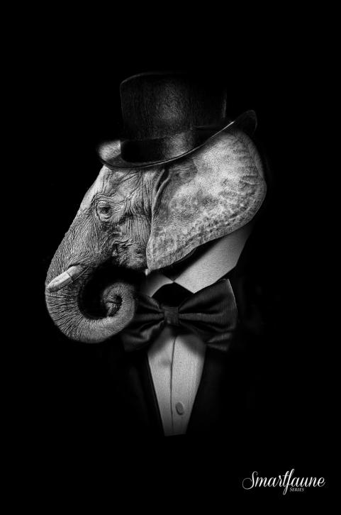 fantasmagorik-square-smart-faune-elephant
