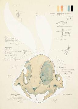 animatus_hyungkoo_lee_bugs_bunny_esquisse-02