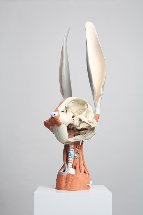 animatus_hyungkoo_lee_bugs_bunny_osmuscle_02