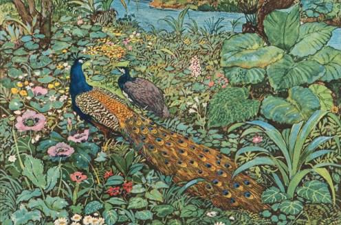 leon_carre_mille_et_une_nuit_histoire_charmante_des_animaux_et_des_oiseaux
