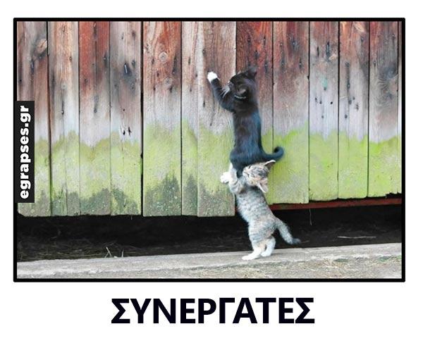synergates