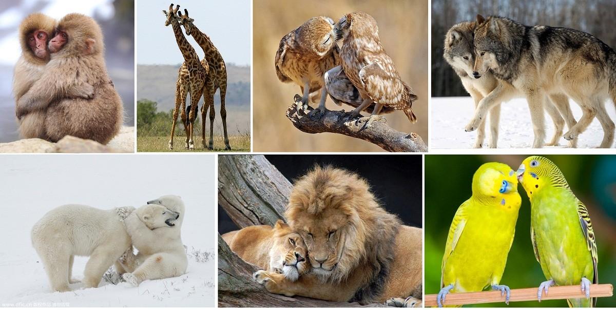 الحب عند الحيوانات فنون العشق والغزل والمداعبة والغيرة