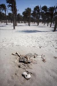 Left on the beach