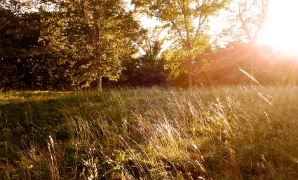 Evening Wind