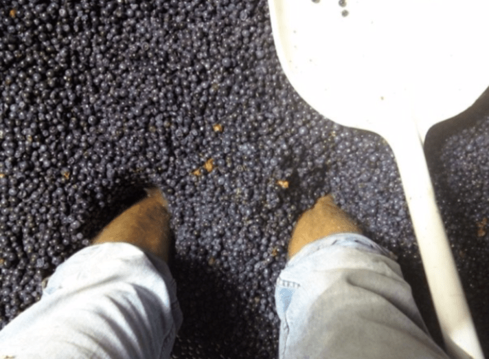 stomping of grapes
