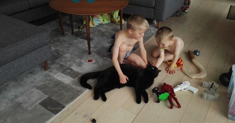 Drengene og katten