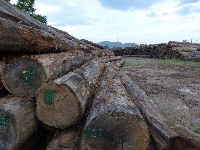 Logs stolen from Laos in the Vietnamese port of Qui Nhon (c) EIA