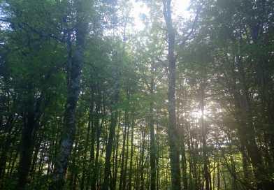 [eiberri.eus] Eibar celebrará el domingo el Zuhaitz Eguna con la plantación de 40 árboles