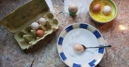 Eier Test