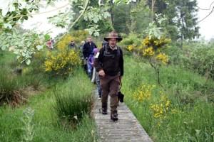 Rangertouren führen am Wochenende in die blühende Ginsterlandschaft auf der Dreiborner Hochfläche. Foto: Nationalparkverwaltung Eifel/A. Olligschlaeger