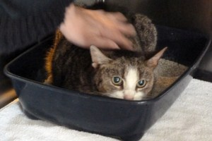 Vor elf Jahren verschwand diese Katze spurlos, jetzt ist sie durch einen Zufall wieder aufgetaucht. Bild: Reiner Bauer