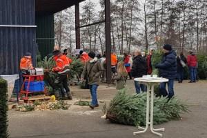 Frisch geschlagene Weihnachtsbäume aus der Eifel gibt es alle Jahre wieder bei den NEW. Bild: Tameer Gunnar Eden/Eifeler Presse Agentur/epa