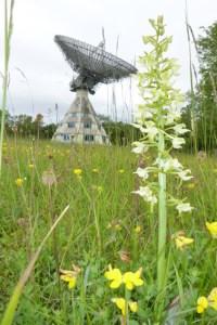 Auch rund um den Astropeiler gibt es viel zu sehen, wie etwa die Orchideenblüte im Mai und Juni. Bild: Karl-Josef Mauel