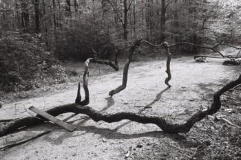 Kurt Dziubek zeigt im Kleinen Kunstraum auch Bilder aus dem Hambacher Forst. Bild: Kurt Dziubek
