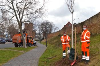 Andreas Zimmer und Andreas Virnich vom Zülpicher Baubetriebshof pflanzen die neuen Bäume im Stadtgebiet. Bild: Julia Schneider/Stadt Zülpich