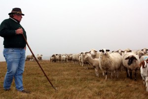 Schafhalter Peter Hilberath passt sich den hohen Anforderungen des Nationalparks an und stellt seinen Betreib auf ökologische Landbewirtschaftung nach EG-Vorgaben um. (Bild: Nationalparkverwaltung Eifel)