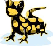 So sieht der kleine Salamander aus, der jetzt einen Namen sucht. Bild/Gestaltung: Jürgen Frohn