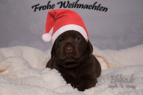 Euer Fotografen Team aus Vettweiss wünscht Euch ein frohes Weihnachtsfest und einen guten Rutsch ins neue Jahr.