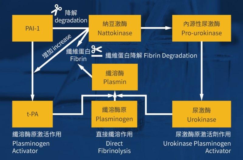 specific mechanism of nattokinase