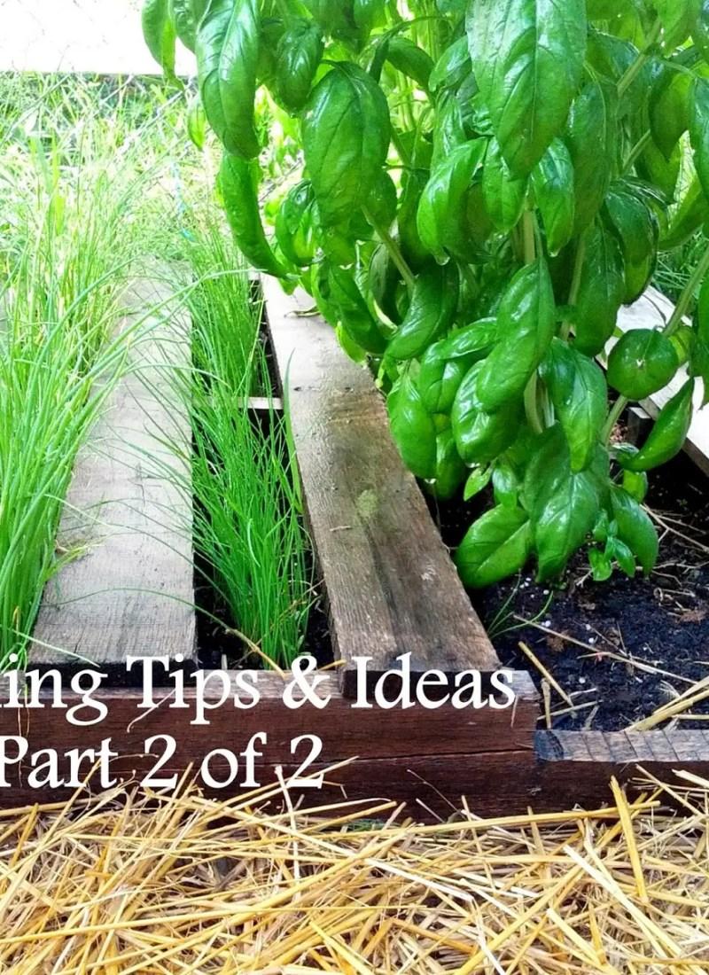 Gardening Tips & Ideas: Part 2 of 2