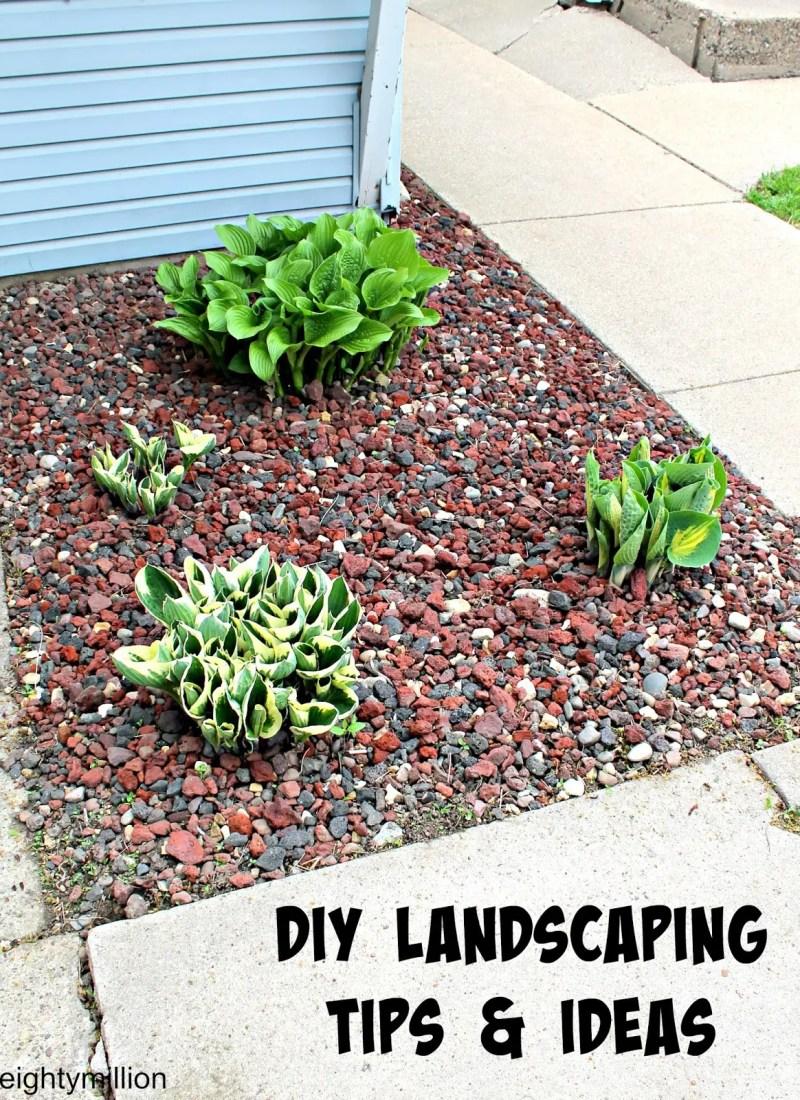 DIY Landscaping Tips & Ideas: Hosta Plants