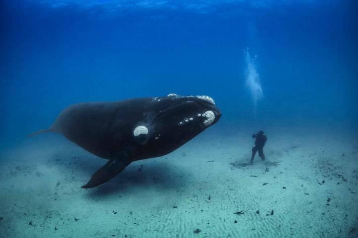 現在完了形 したことある・ない - ザトウクジラに向かっているスキューバダイバー、感動 - 函館英会話教室EigoLa
