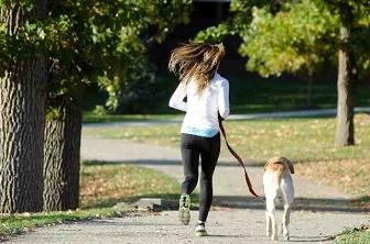 仕事効率化 犬散歩