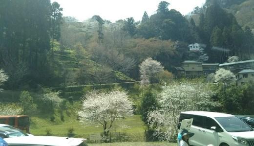 【奈良】吉野山の桜を見に行ったよ! お花見スポット・アクセス・見頃・混雑具合などをご案内