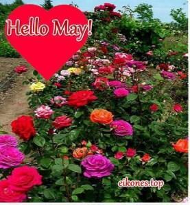 Εικόνες για hello may