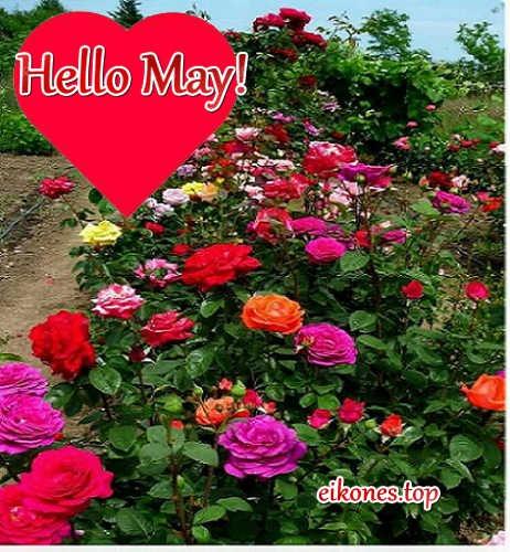 Εικόνες για hello may-Welcome May