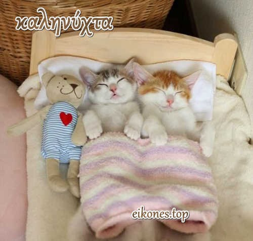 Εικόνες με γατάκια για καληνύχτα!