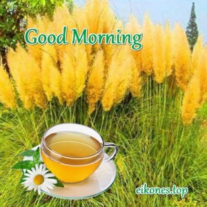 Good Morning…! Εικόνες Τοπ