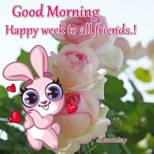 Good morning and happy week to all