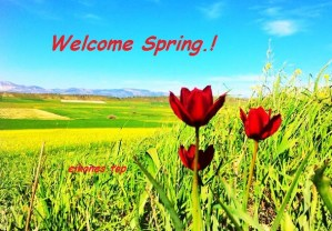 Welcome Spring.!